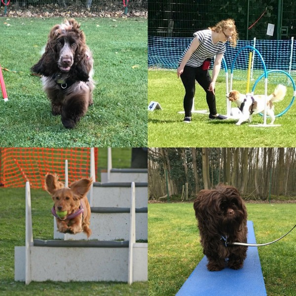 Dog Activity Class Ipswich - Saturday 1.15pm